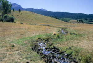 A damaged water stream bank caused by cattle