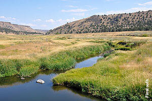 320px-South_fork_crooked_river -finetooth
