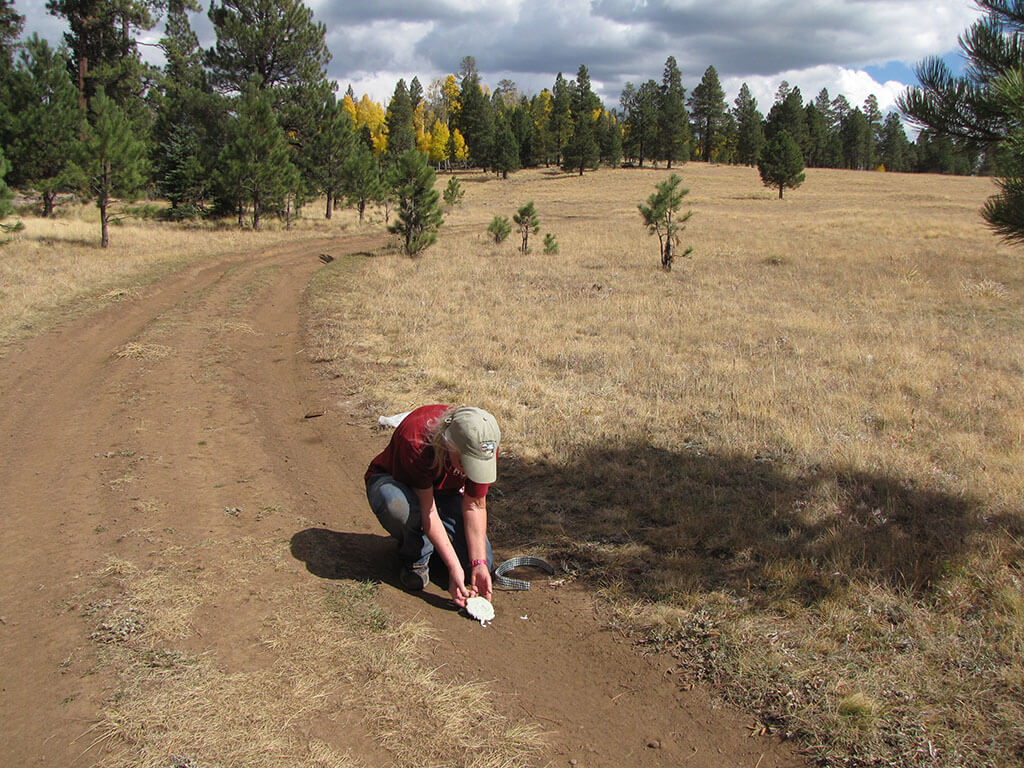 Arizona – In the Footsteps of Leopold/White Mountains