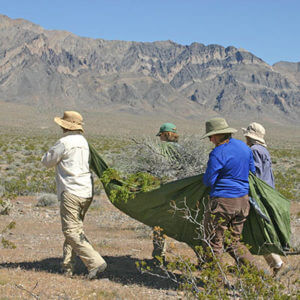 Women with a tarp full of dead vegetation to perform vertical mulching.