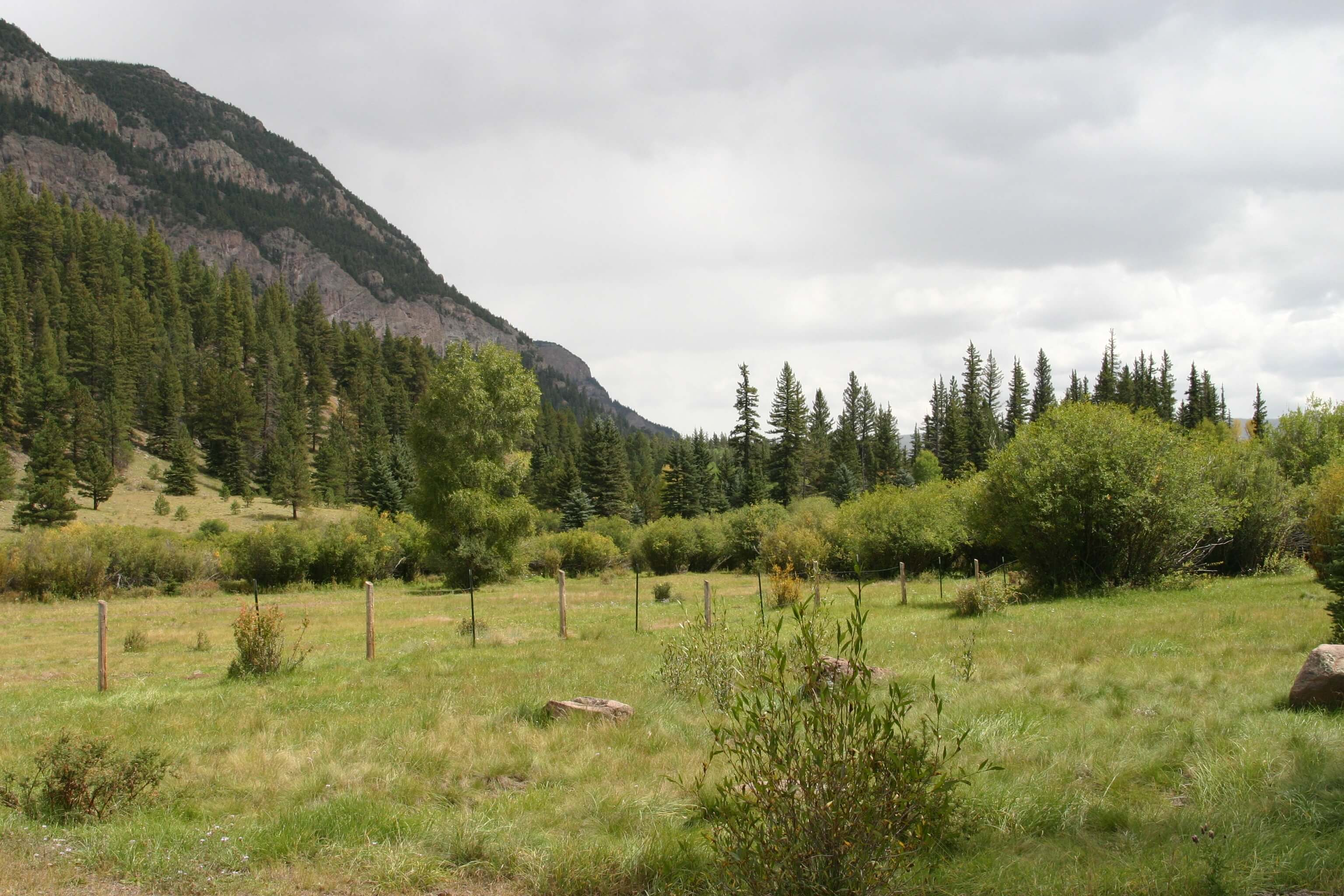 a scenic picture of a meadow and mountains