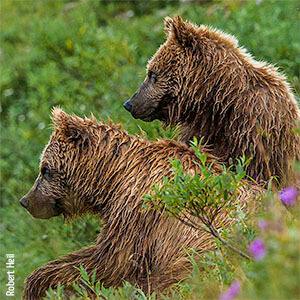 Two wet bears standing by each other