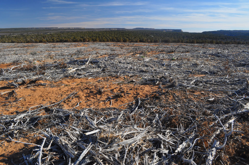 """Aftermath of a BLM """"mastication"""" project on Utah public lands. Copyright Ray Bloxham/SUWA"""