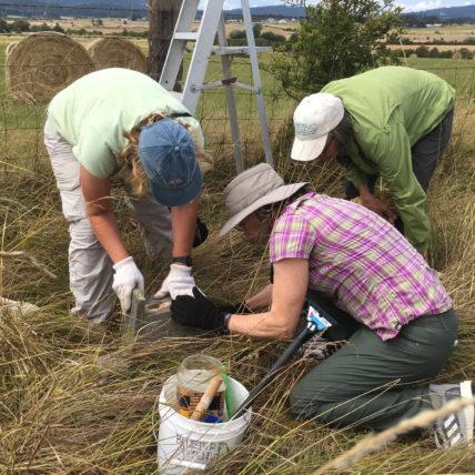 women doing field work