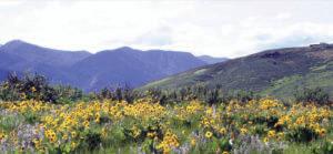 wild-flower-wilderness-greatoldbraods/blog
