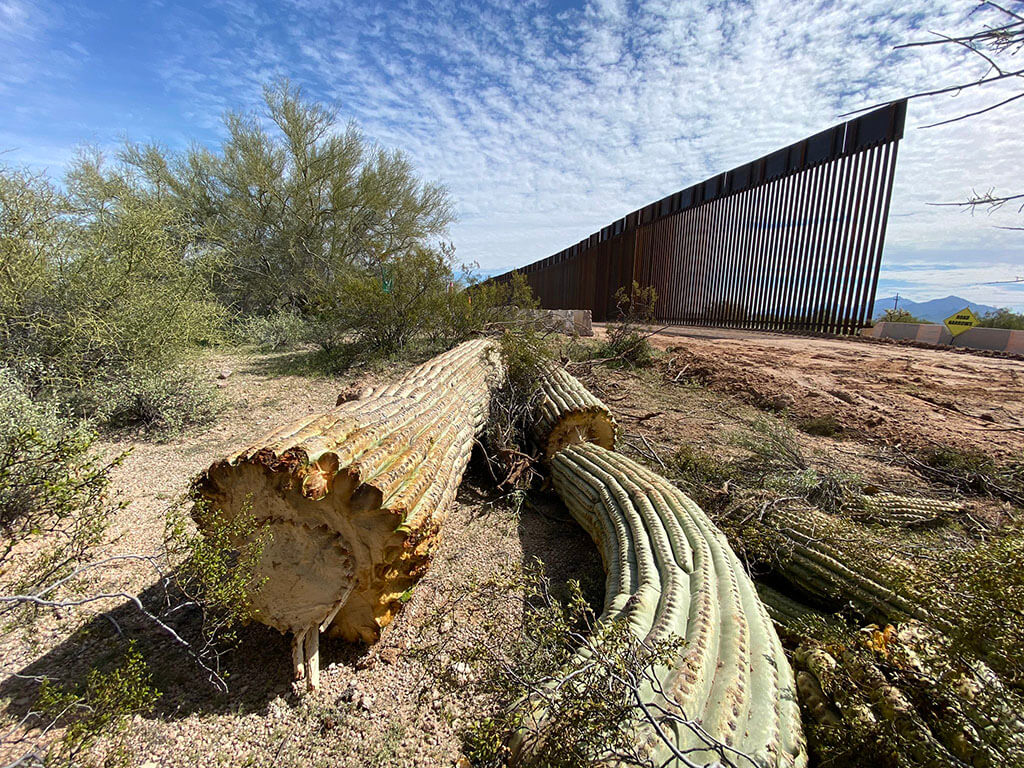 Ancient cactus mowed down along the border wall